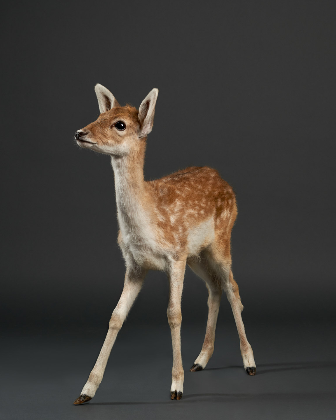 doenut the doe fawn baby dear bamby