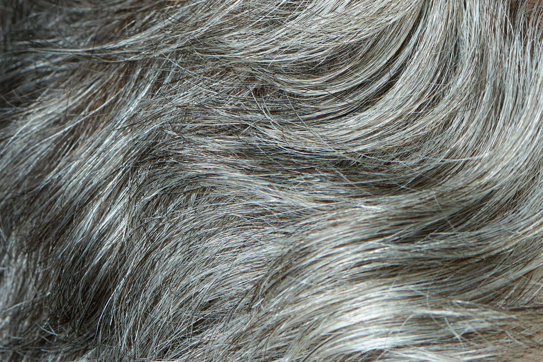 CH.Mans.Hair.Close.Up.5266