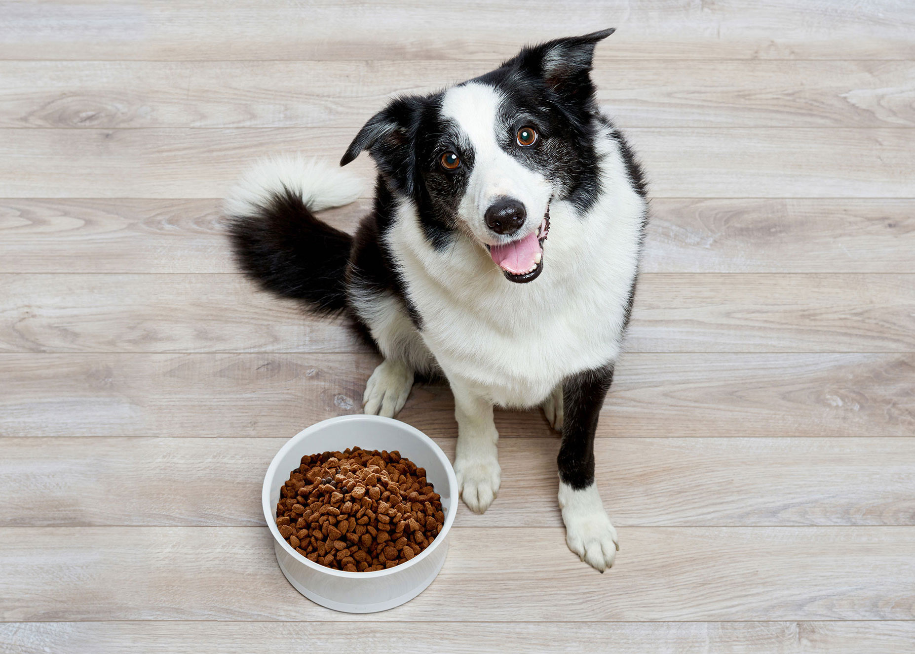 Obedog.-dog-food.boarder-collie.15581.5.2