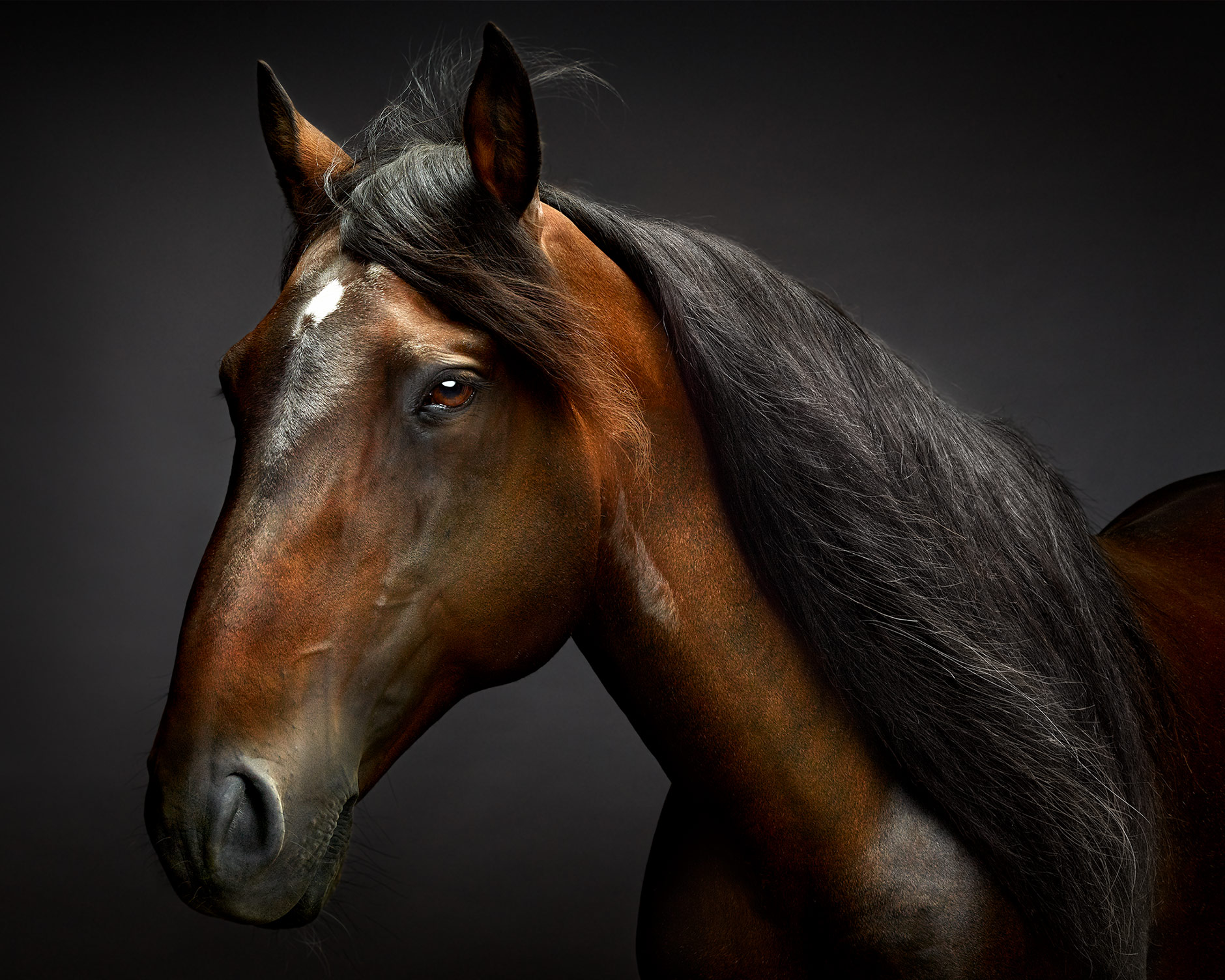 Touche_Lusitano.Horse.Art.Photo.Equine.Peter.Samuels