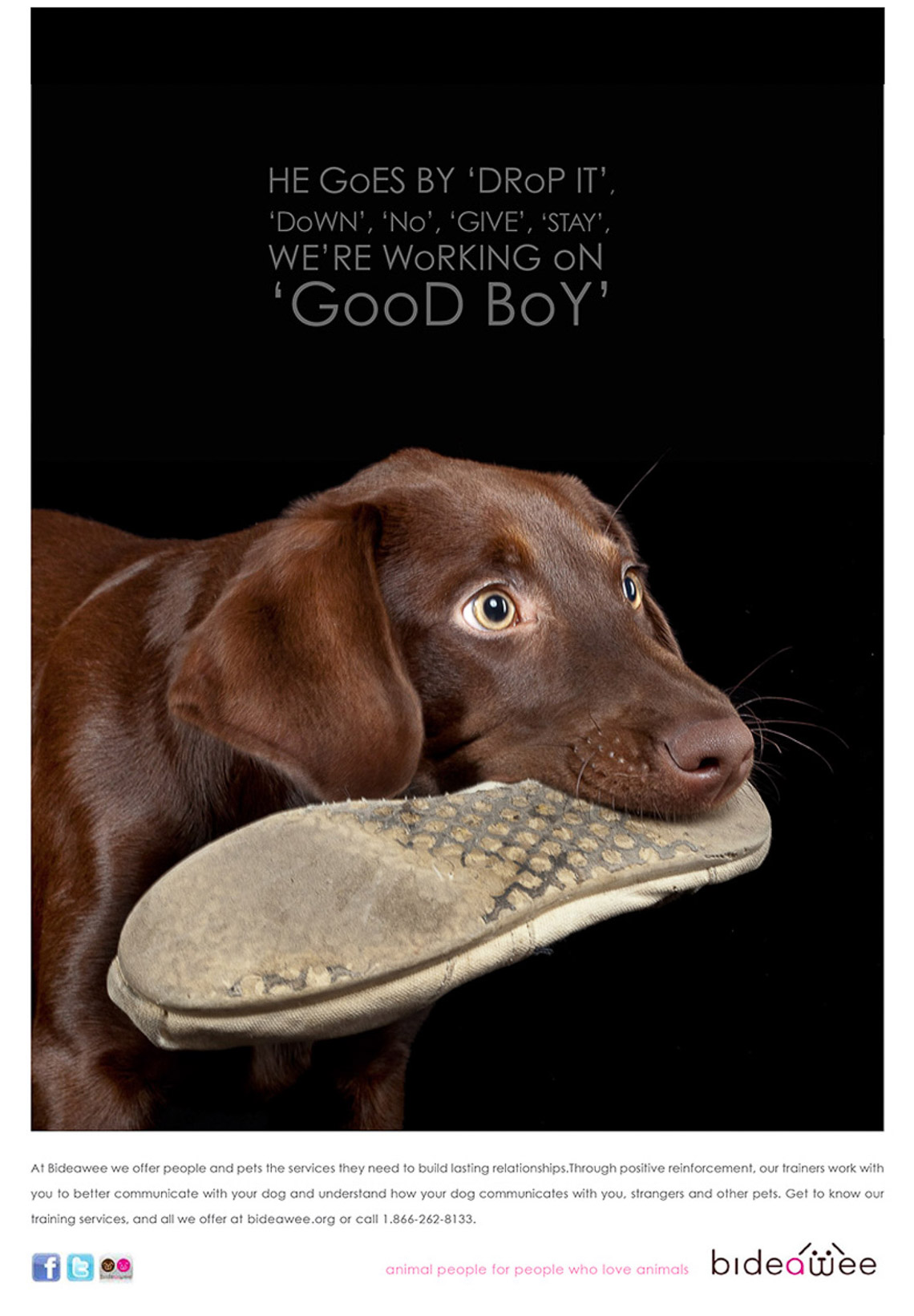 bideawee.pet.services.dog.cat.advertising.photographer.comercial.7