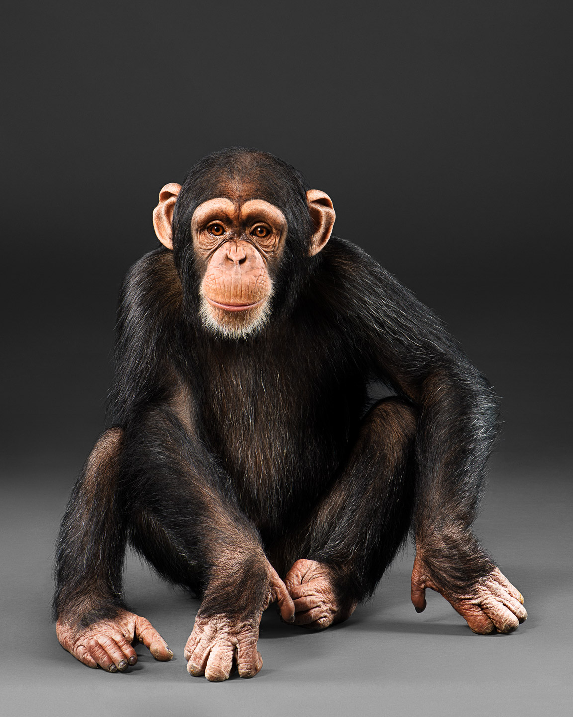 eli the chimpanzee baby chimp