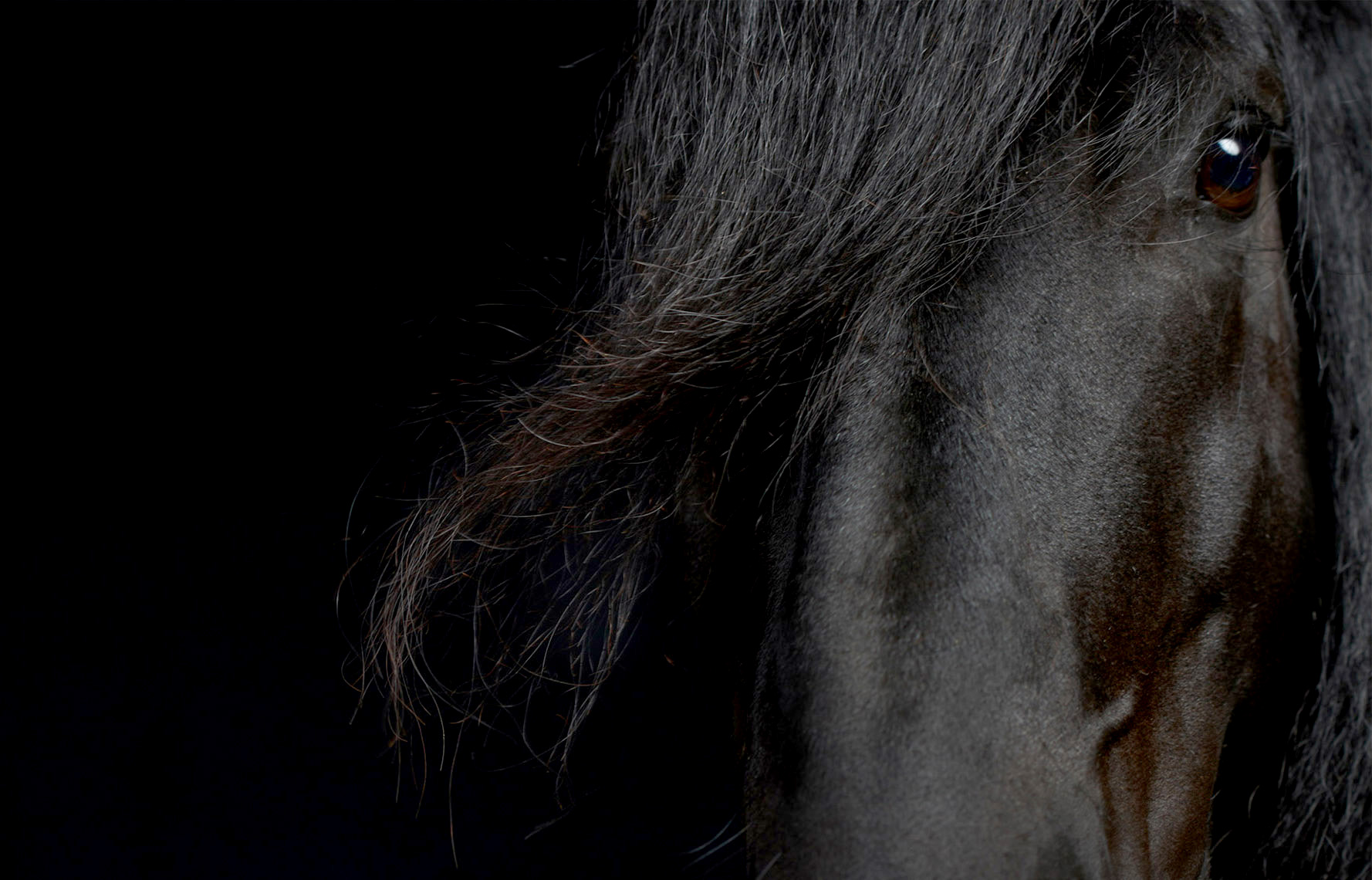 equine.horse.animal-photographer.peter-samuels.11