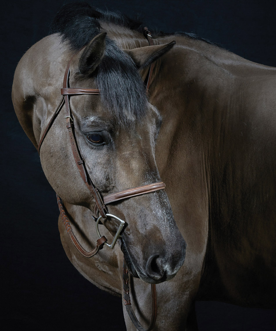 horse.equine.eqestrian.photo.peter.samuels.3