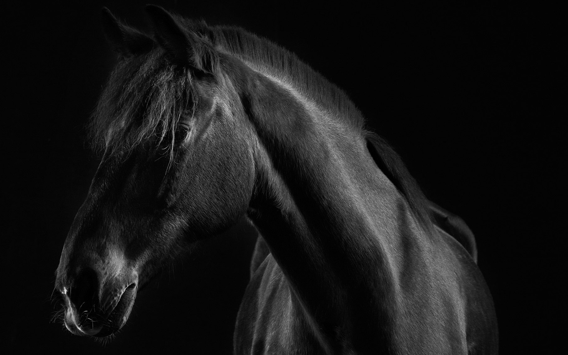 horse.equine.eqestrian.photo.peter.samuels.8