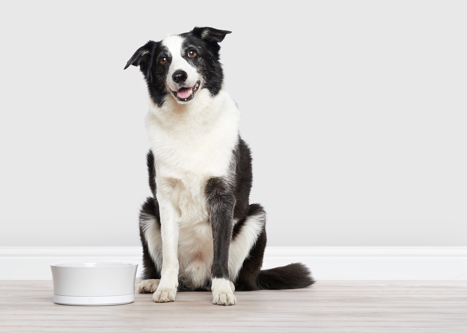 obedog.dog-food.border-collie-bay-area-photographer-san-francisco