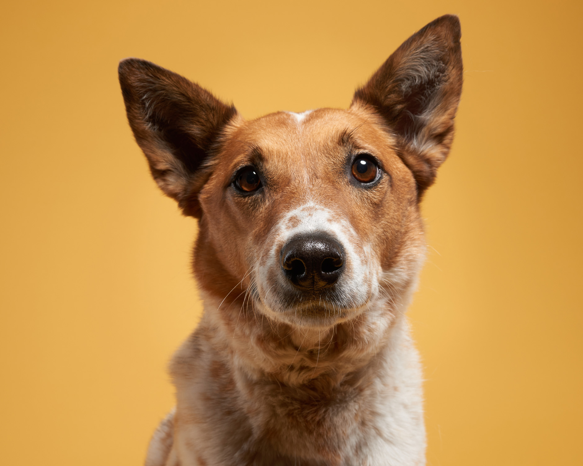 dog pet commercial photographer san francisco bay area